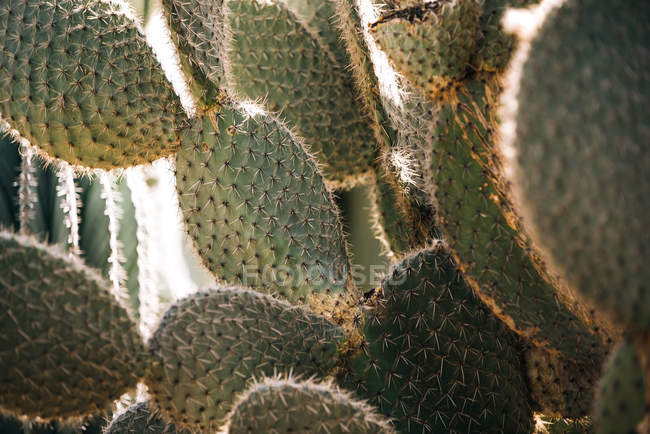 Close-up of prickly cactus plant — Stock Photo