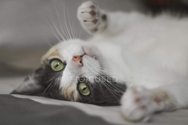 Adorable kitten looking at camera while lying on soft bed at home — Stock Photo