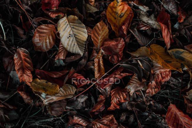Fondo de hojas de otoño coloridos en suelo - foto de stock