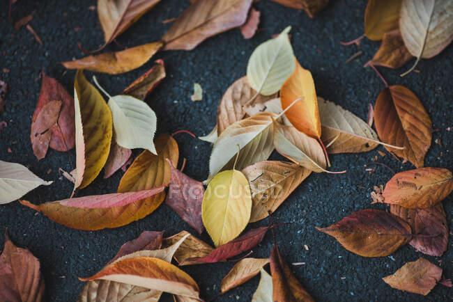 Сверху на асфальте на улице лежала куча прекрасных осенних листьев — стоковое фото