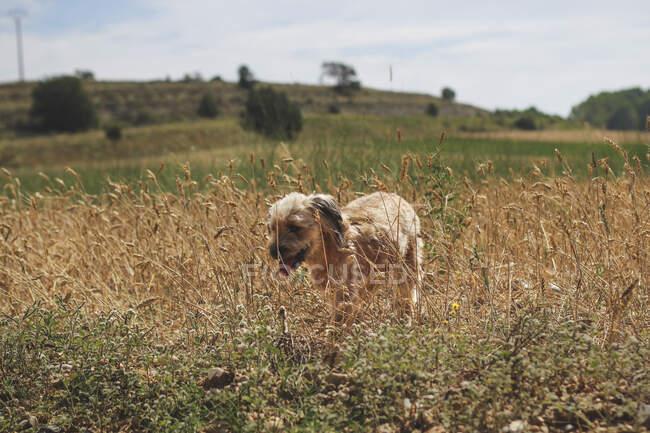 Собака бегает в поле — стоковое фото