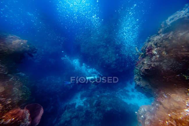 Plongée entre récifs sous-marins — Photo de stock