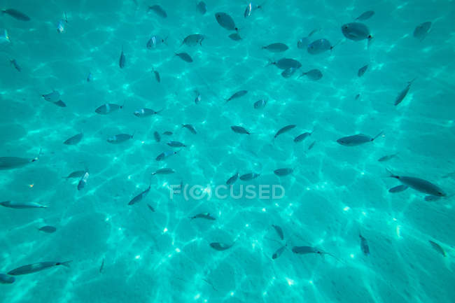 Azure sea water with little fish — Stock Photo