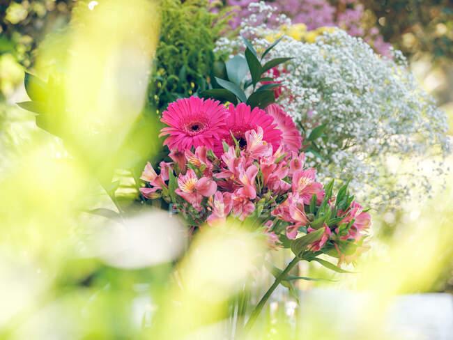 Кучки гарних квітів стоять в саду в чудовий сонячний день. — стокове фото