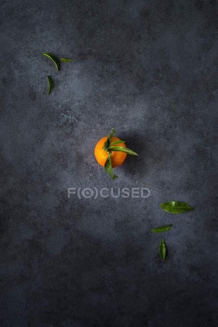 Mandarino fresco con gambo e foglie su fondo scuro — Foto stock