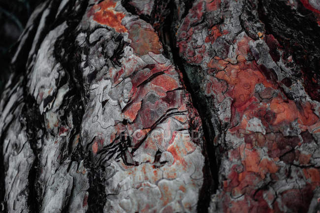 Background of grey cracked bark of tree — Stock Photo