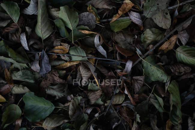 Fundo de folhas de outono coloridos deitado no chão — Fotografia de Stock