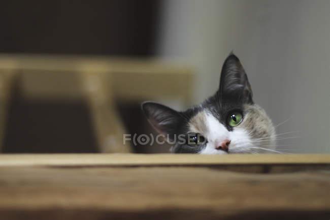 Primer plano de lindo gato mirando cámara en escalera - foto de stock