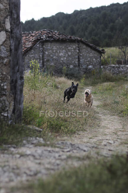 Two funny dogs running together along narrow path in beautiful countryside — Stock Photo