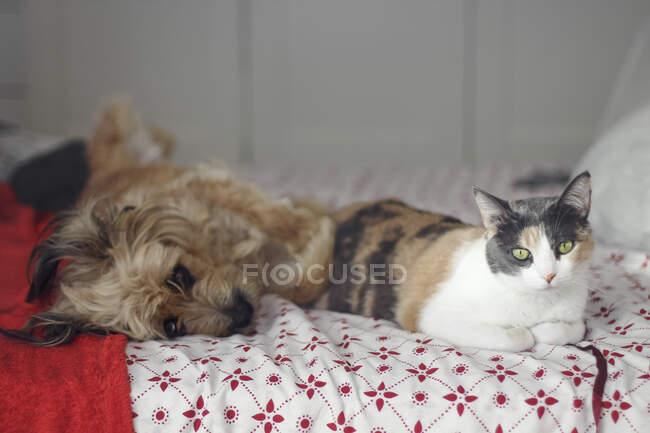 Gato y perro relajándose en casa - foto de stock