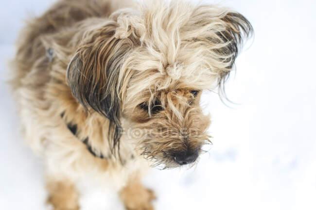 Furry dog having fun in snow — Stock Photo