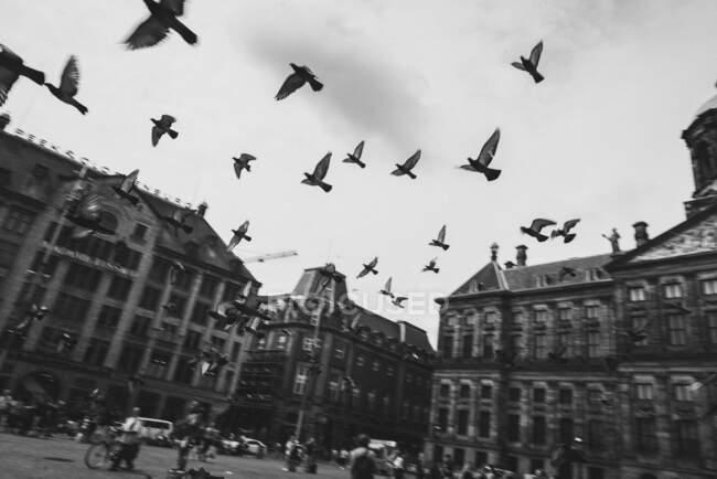 Знизу темношкірі та білі птахи летять між ретро будівлями на площі в Голландії. — стокове фото