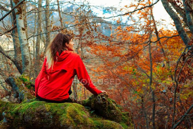 Вид сзади на молодую женщину в красной куртке, сидящую на мохнатом стволе старого дерева в величественном осеннем лесу — стоковое фото
