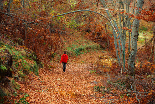 Back view of lady in red jacket walking along path in beautiful forest on amazing autumn weather — Stock Photo