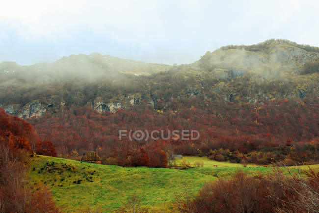 Breathtaking view of wonderful trees with red leaves growing near amazing mountain ridge on misty weather in autumn countryside — Stock Photo