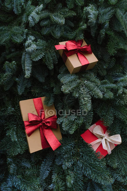 From above shot of two Christmas gift boxes lying on green twigs of conifer tree — Stock Photo