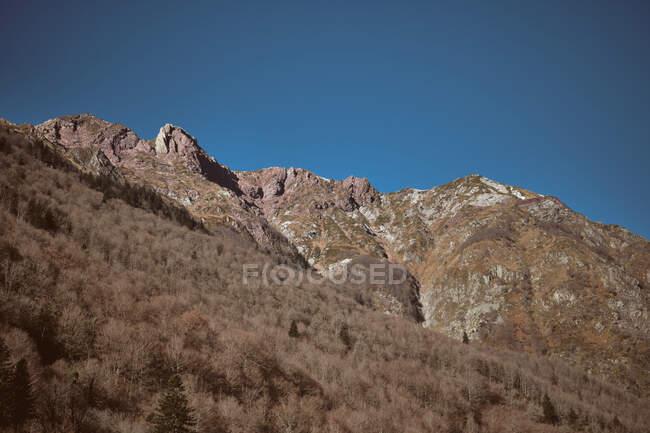 Прекрасный вид на высокие снежные горы и деревья на холмах — стоковое фото