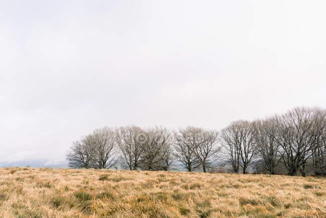 Луг с сухой травой возле леса на холме и облачное небо в Ордуне, Испания — стоковое фото