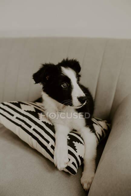Cute puppy sitting on sofa — Stock Photo