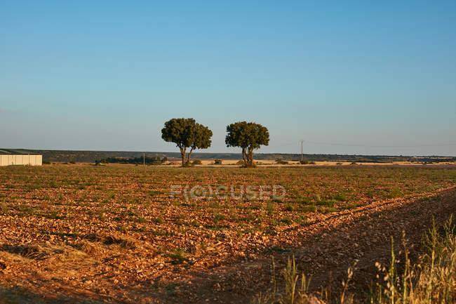 Lignes des usines et des arbres verts dans la campagne — Photo de stock