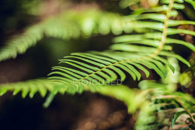 Closeup verdant foliage on twigs of tropical plant growing in forest in San Francisco, USA — Stock Photo