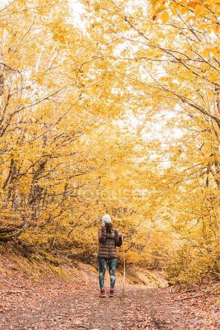 Dame au chapeau et veste de ski avec sac à dos et bâton de marche tenant la caméra au niveau du visage sur le sentier entre la forêt d'automne à Isoba, Castille et Léon, Espagne — Photo de stock