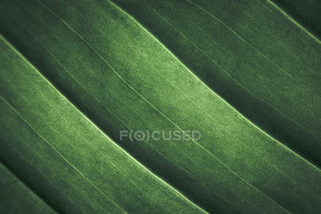 Closeup of pattern of fresh green plant leaves — Stock Photo