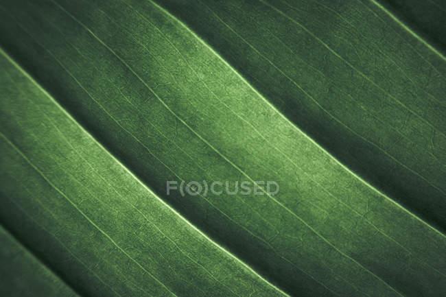 Nahaufnahme des Musters der frischen grünen Pflanze Blätter — Stockfoto