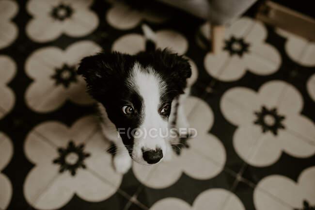 Смешной щенок сидит на полу — стоковое фото