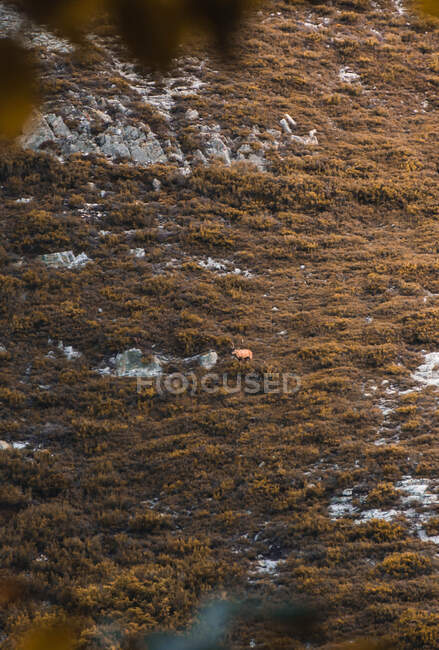 From above wild reindeer standing between green meadow in Isoba, Castile and Leon, Spain — стоковое фото