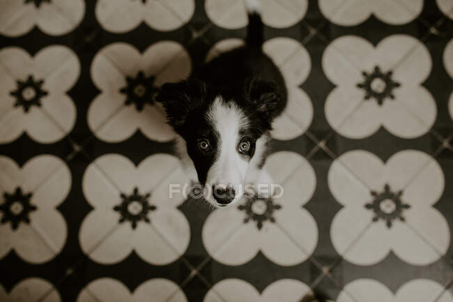 Funny puppy sitting on floor — Stock Photo