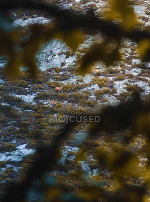 Reno salvaje de arriba entre prados verdes en Isoba, Castilla y León, España - foto de stock