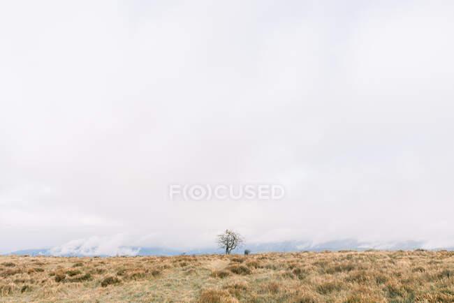 Pradera con hierba seca cerca de bosques en la colina y cielo nublado en Orduna, España - foto de stock