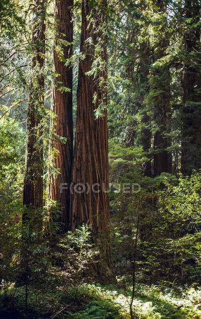 High green trees in forest in summer — Stock Photo