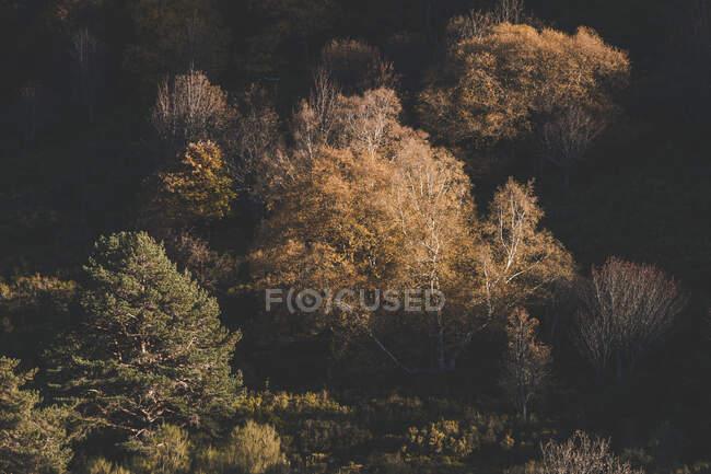 Paisagem de árvores com folhagem de queda pálida em luz suave do sol na floresta — Fotografia de Stock