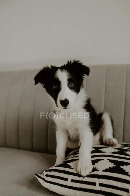 Симпатичный щенок сидит на диване — стоковое фото