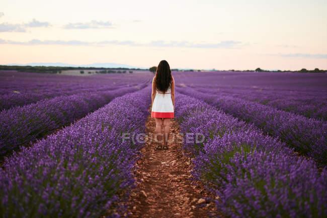 Jeune femme entre champ de lavande violette, vue de dos — Photo de stock