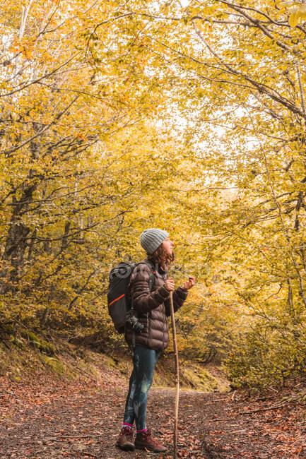 Vue latérale d'une dame en chapeau et veste de ski avec sac à dos et bâton de marche sur le sentier entre la forêt d'automne à Isoba, Castille et Léon, Espagne — Photo de stock