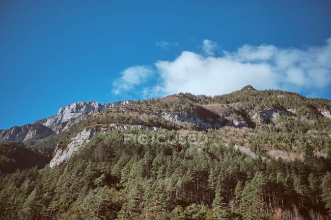 Cielo azul con pequeñas nubes sobre majestuosas montañas rocosas con las piceas - foto de stock