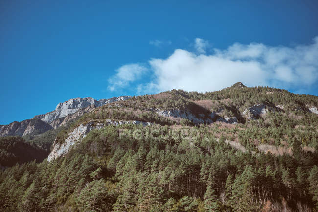 Синє небо з невеликих хмара над величний rocky гора з смереки — стокове фото