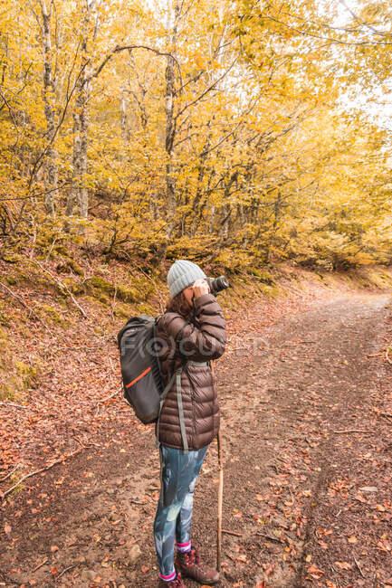 Vue latérale d'une dame en chapeau et veste de ski avec sac à dos et bâton de marche tenant la caméra au niveau du visage sur le sentier entre la forêt d'automne à Isoba, Castille et Léon, Espagne — Photo de stock