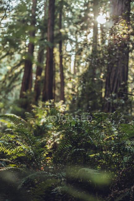 Высокие зеленые деревья в лесу летом — стоковое фото