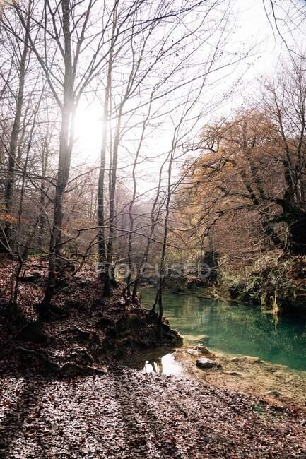 Orilla cerca de un pequeño lago y árboles desnudos con aguas tranquilas en el soleado día de otoño en Navarra, España - foto de stock