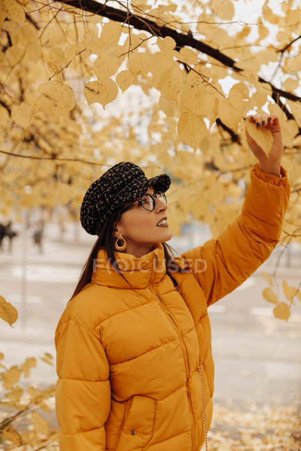 Young woman in stylish warm clothes touching yellow leaves on tree on autumn street — Stock Photo
