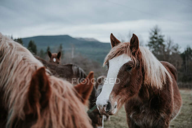 Hermosos caballos pastando en el campo entre los árboles cerca de las colinas y el cielo nublado en los Pirineos - foto de stock