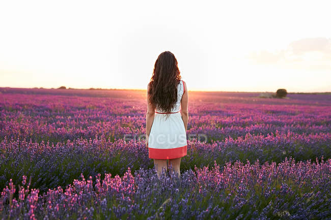 Back view of young lady between beautiful purple flowers on lavender field at sunrise — Stock Photo