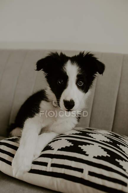 Carino cucciolo seduto sul divano — Foto stock