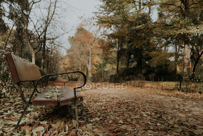 Side view of aged seat on alley between fallen leaves in forest — Stock Photo