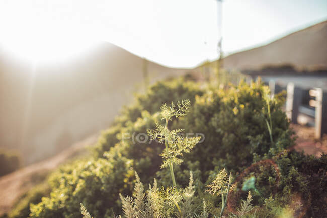 Closeup verdant grass growing on mountain in sunny day on blurred background in San Francisco, USA — Stock Photo