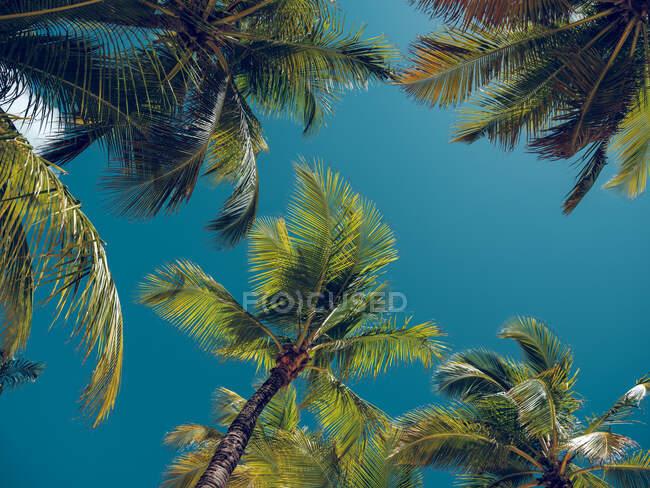 Wonderful palms growing near sea — Stock Photo